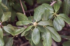 绿色发芽的花 免版税库存图片