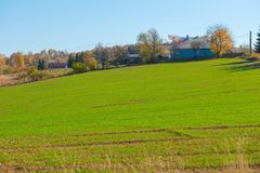 绿色可耕的领域 库存照片
