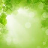 绿色叶子、夏天或者春天背景  库存照片