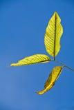 绿色叶子。 库存照片