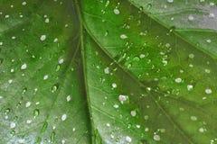 绿色叶子下落水 免版税库存照片