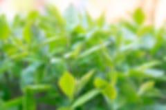 绿色叶子与一个晴朗的春日 免版税库存图片