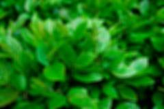 绿色叶子与一好日子 r 免版税库存图片