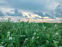 绿色叶子分支,天空日落背景 库存照片