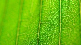 绿色叶子分析 股票视频
