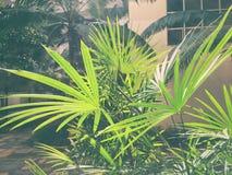 绿色叶子反射 库存照片