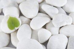 绿色叶子向白色扔石头 免版税库存图片