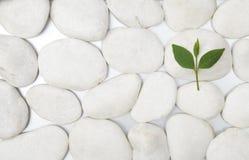 绿色叶子向白色扔石头 库存照片