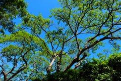 绿色叶子和分支在蓝天前面 免版税库存图片