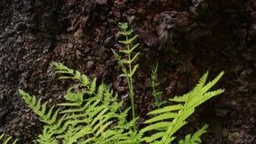 绿色叶子和分支在风 影视素材
