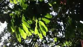绿色叶子和分支在风 股票视频