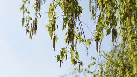 绿色叶子和天空 库存照片
