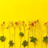 绿色叶子和微小的红色花在黄色 免版税库存照片