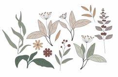 绿色叶子和早午餐绿叶草本手rawn例证草本和叶子 ?? E 画的自然 向量例证