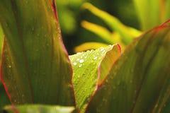 绿色叶子和植物纹理有自然背景 库存照片