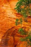 绿色叶子和红色岩石环境美化,锡安 图库摄影