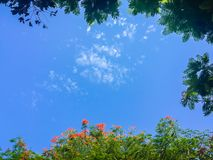 绿色叶子和红色花框架有蓝天背景和 库存照片