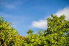 绿色叶子和红色花框架有蓝天背景和 库存图片