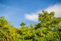绿色叶子和红色花框架有蓝天背景和 免版税库存照片