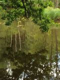 绿色叶子和绿色水 免版税库存照片