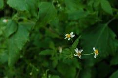 绿色叶子围拢的小组三朵小花 库存照片
