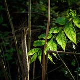 绿色叶子在城市公园 免版税库存图片