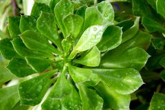 绿色叶子在庭院背景中 库存图片