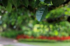 绿色叶子在庭院里 免版税库存图片