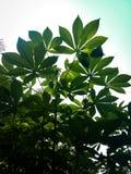 绿色叶子在有天空蔚蓝的森林里 免版税库存图片