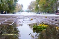 绿色叶子在铺的瓦片的水坑在,第一雪落 免版税库存照片