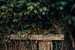 绿色叶子墙壁以木柱子为背景的 免版税库存图片