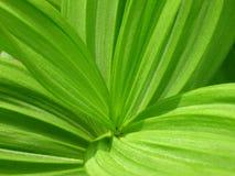 绿色叶子宏指令 免版税库存照片