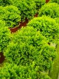 绿色叶子工厂 免版税图库摄影