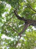 绿色叶子庭院早晨 免版税图库摄影