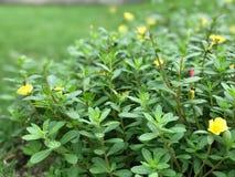 绿色叶子庭院早晨 免版税库存图片