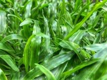 绿色叶子庭院早晨 免版税库存照片
