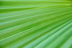 绿色叶子掌上型计算机纹理 库存照片
