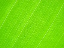 绿色叶子排行宏指令 库存照片