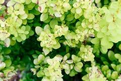 绿色叶子样式背景,顶视图从上面 免版税图库摄影