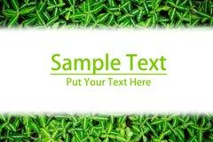 绿色叶子框架 免版税图库摄影