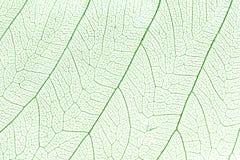绿色叶子概要 免版税图库摄影