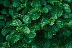 绿色叶子模式 背景蓝色云彩调遣草绿色本质天空空白小束 免版税图库摄影