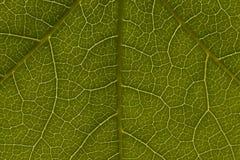 绿色叶子模式 库存照片