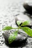 绿色叶子温泉石头 库存照片