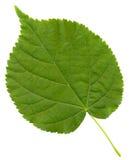 绿色叶子特写镜头照片  库存图片