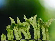 绿色叶子的小组在阳光下的说明成长概念 库存图片