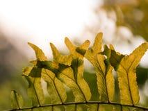 绿色叶子的小组在阳光下的说明成长 库存照片