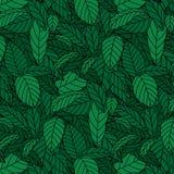 绿色叶子的样式的手拉的传染媒介例证 作为对墙纸的背景服务 免版税库存图片