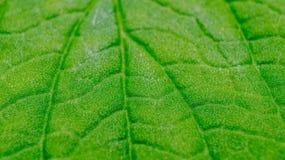 绿色叶子纹理详细的宏指令  库存图片