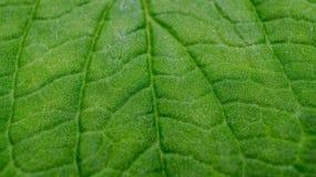 绿色叶子纹理详细的宏指令  库存照片